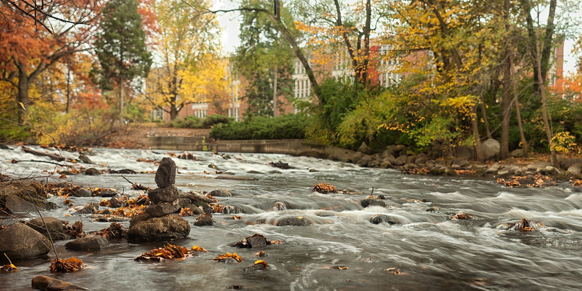 The Red Cedar by rmblack
