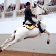 Vienna Austria | Spanish Riding School
