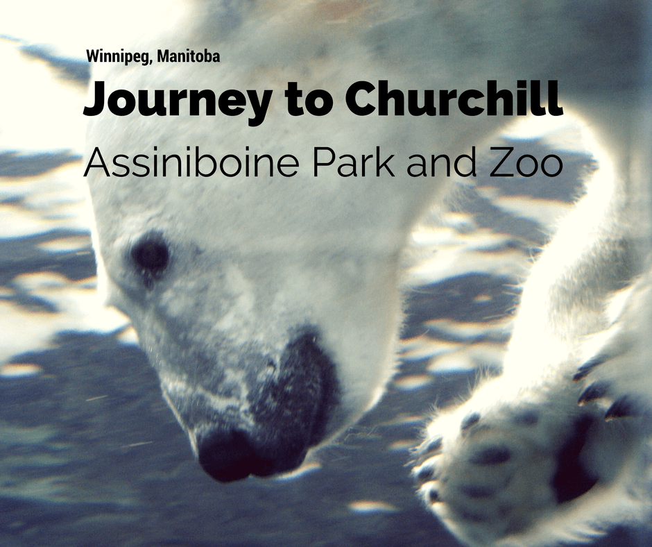 Journey to Churchill | Assiniboine Park and Zoo | Winnipeg, Manitoba