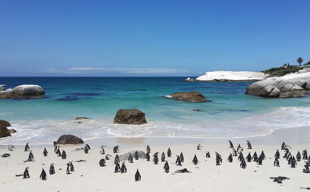 Boulders Beach | Cape Town, South Africa