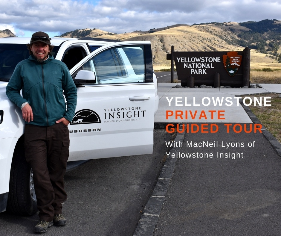 Extraordinary private guided tour of Yellowstone National Park with Yellowstone Insight