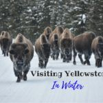 Why you should visit Yellowstone in winter + what you need to know to plan your trip